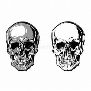 Skull Anatomy Front On White Background Stock Vector ...