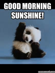 Funny Morning Memes - good morning sunshine pictures photos and images for facebook tumblr pinterest and twitter