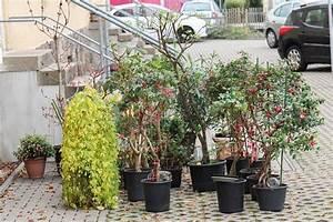 Hortensien überwintern Im Keller : fuchsien berwintern majas pflanzenwelt ~ Lizthompson.info Haus und Dekorationen
