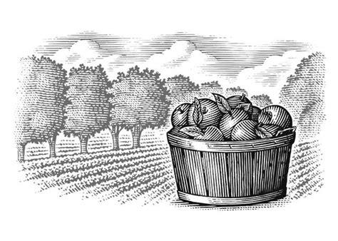 apple orchard illustration steven noble illustrations apple orchard
