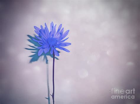 blue flower touch l touch of shimmer blue flower art photograph by adri turner
