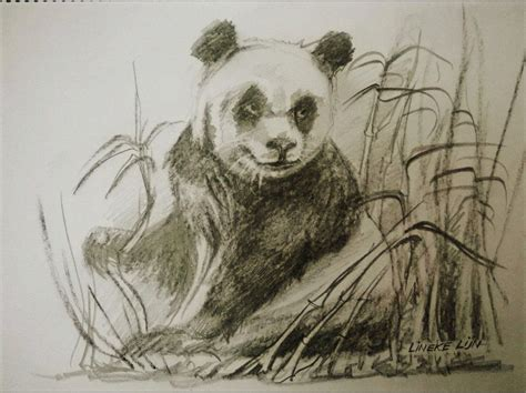 panda drawing  charcoal  pencil bylineke lijn
