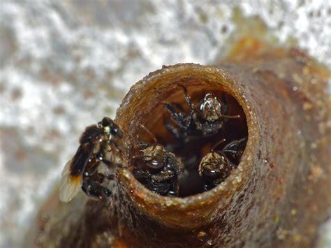 ฐานเรียนรู้ผึ้งชันโรง