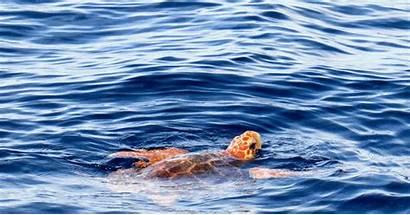 Sea Turtles Lights Turtle Island Vacation Head