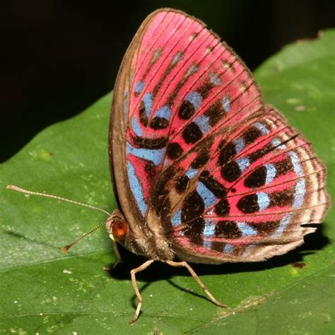 flying kiwi bug macro photography tips