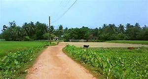 Pic 8 - Village Road - Ghumakkar