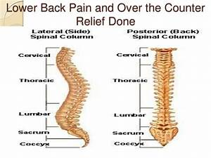Lower Back Pain Guide