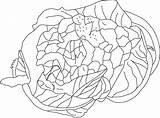 Cauliflower Coloring Healthy Pages sketch template