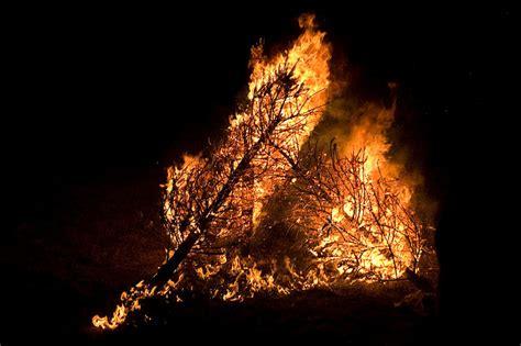 28 best burning christmas tree 2 palestinians arrested
