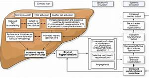 Functional aspects on the pathophysiology of portal ...