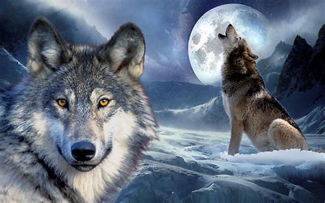 Wolf Wallpaper Real by 25 Enchanting Wolf Pictures Style Arena