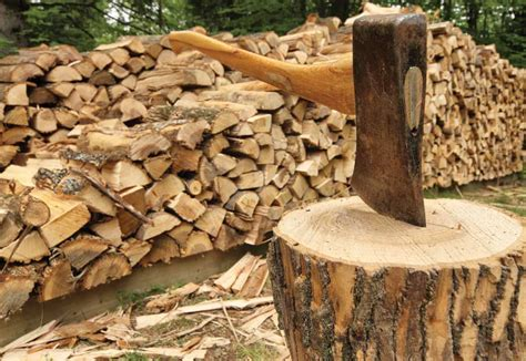 harvesting firewood  conventional wisdom   wrong
