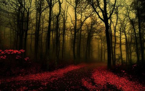 forest backgrounds  psd ai