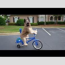 Best Dog Tricks Youtube