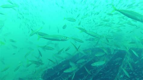 gulf mexico shipwreck fish