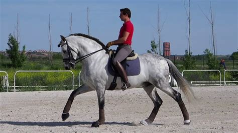 horse dressage lusitano breeds andalusian these