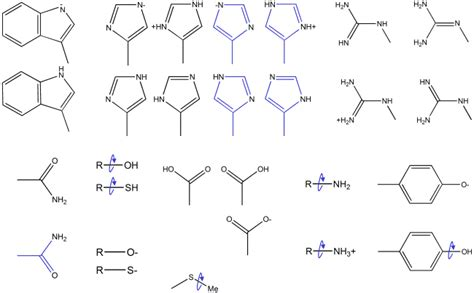 Assignment Of Macromolecular Protonation