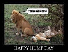 Hump Day Meme Dirty - 1000 images about hump day on pinterest hump day happy wednesday and wednesday
