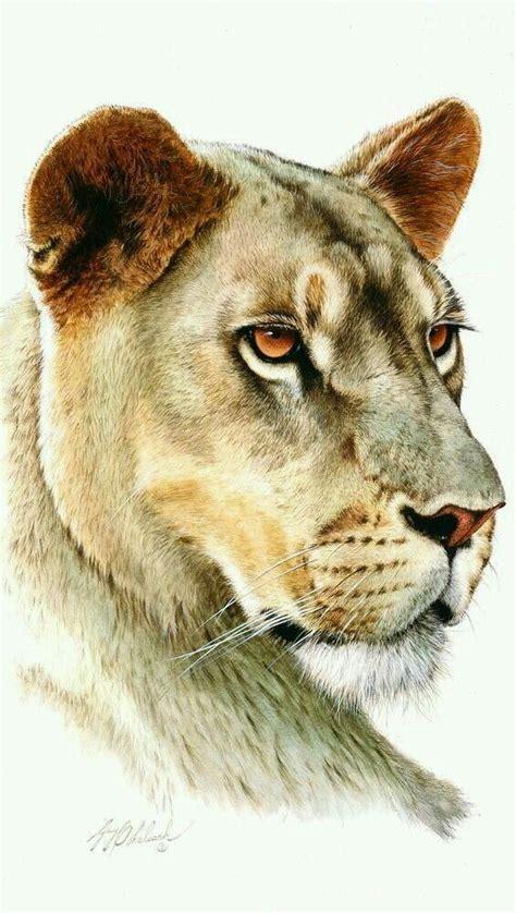 guy coheleach images  pinterest wildlife art