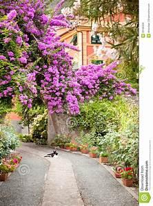 Blumen Im Garten : blumen im garten in italien lizenzfreie stockbilder bild 33196429 ~ Bigdaddyawards.com Haus und Dekorationen