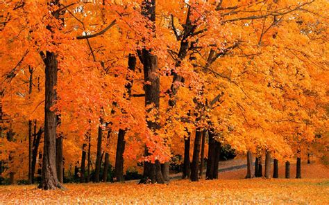 Fall Foliage Wallpapers For Desktop