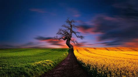 The Lonely Tree Wallpapers - Wallpaper Cave