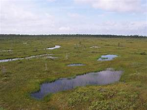 Wetlands Play Vital Role In Carbon Storage  Study Finds