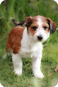 CAMILA | Adopted Puppy | Poway, CA | Australian Shepherd ...