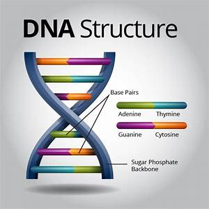 Dna Is The Universal Genetic Code That Stores Complex