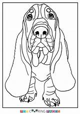 Hound Basset Coloring Pages Sheets Colouring Getdrawings Printable Getcolorings sketch template