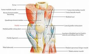 Easy Notes On  U3010patella  Knee Cap  U3011learn In Just 3 Minutes   U2013 Earth U0026 39 S Lab