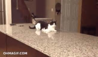 cat gif cat gif cat cats discover gifs