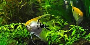 Welche Fische Passen Zusammen Aquarium : aquarium besatz beispiele aquarium fische ~ Lizthompson.info Haus und Dekorationen