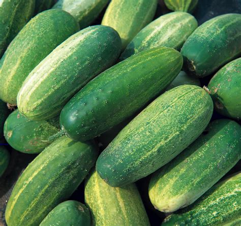Cucumber Seeds by Cucumber Seed Seeds