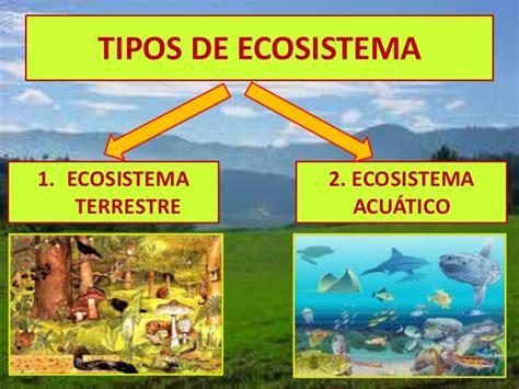 el ecosistema explicado para ni 241 os