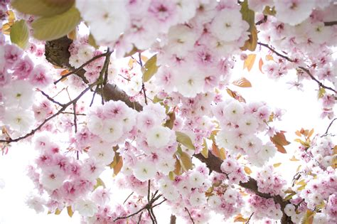 trees that pink flowers pink flower tree by maddin4j on deviantart