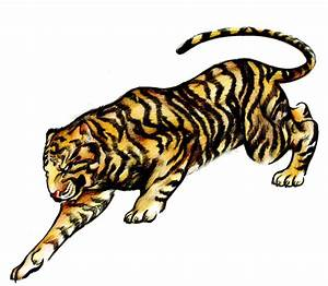 How to Draw a Tattoo-Style Tiger With Colored Pencils