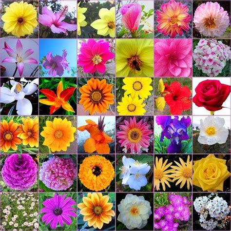 type of flowers flowers types