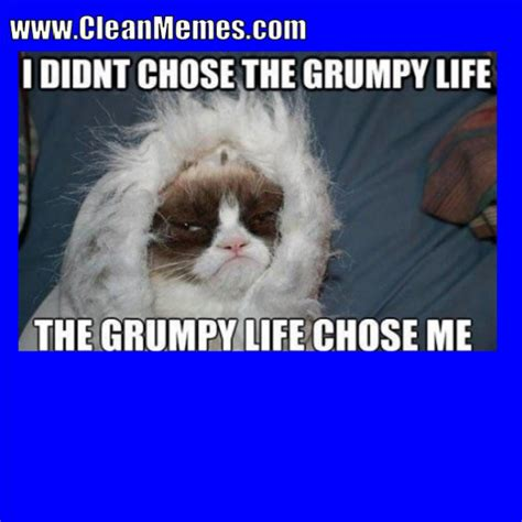 • • • bernie memes are so last week. Best Cat Quotes For Every Occasion | Cat memes clean, Angry cat memes, Cat memes
