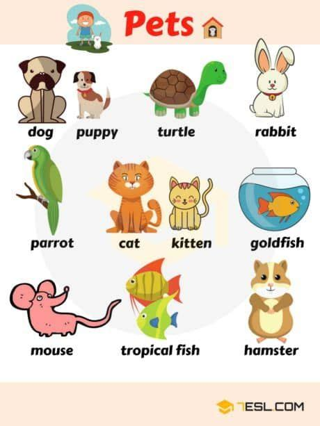Animal Names: Types Of Animals With List & Pictures