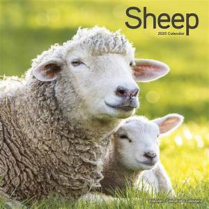 Month Calendars 2020 Sheep Calendar 2020 At Calendar Club