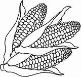 Maize Pages Staple Picolour Colouring sketch template