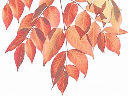 Autumn Leaves Leaf Nature Colorful Pixabay