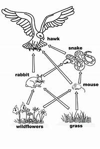 25 best ideas about food webs on pinterest food chain With feeds at the other switch follow the diagram below for the connections