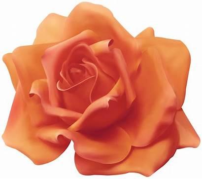 Orange Transparent Peach Rose Clipart Roses Yopriceville