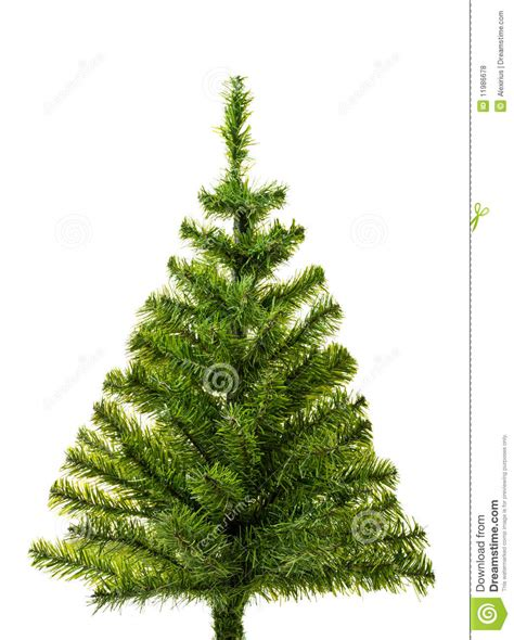 small christmas tree ready  decorate royalty  stock