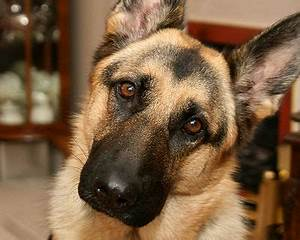 Do Dogs Understand Our Words - The Pet Wiki