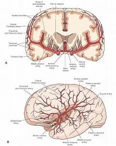 Spinal Cordperipheral Nerve