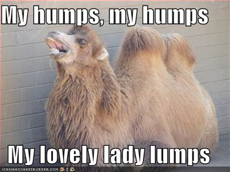 Funny Hump Day Memes - oopsie daisy i said that may 2010