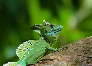 Wildlife Holidays In Costa Rica